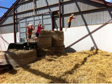Öppen gård i sommar