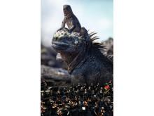 Iguanas_Orchestra