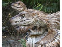 Knuthenborg Safaripark:  Dinosaurier-Wald - Velociraptor