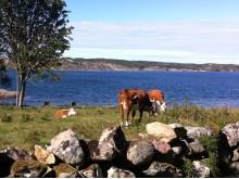 Björshuvudets naturreservat