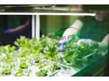 Sallad odlad i Ingka-koncernens globala kontor 2