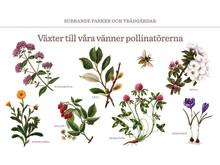 vaxtguide våra vänner pollinatörerna
