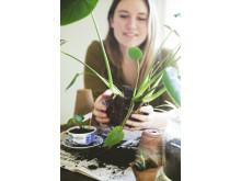 Karoline Jönssons växtbytardag!