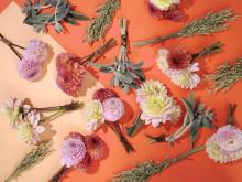 Sensommarens blommor