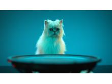 SONY_GTK-XB7_ANIMALS_2