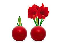 Röd amaryllis i julkula