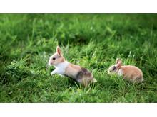Kaninchen benötigen viel Platz zum Toben und Spielen.