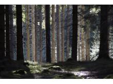 Ur skog – Bortom horisonten