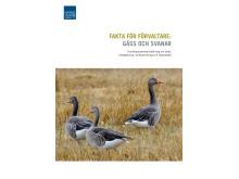 Fakta för förvaltare: gäss och svanar