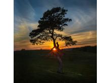 Årets trädbild 2014
