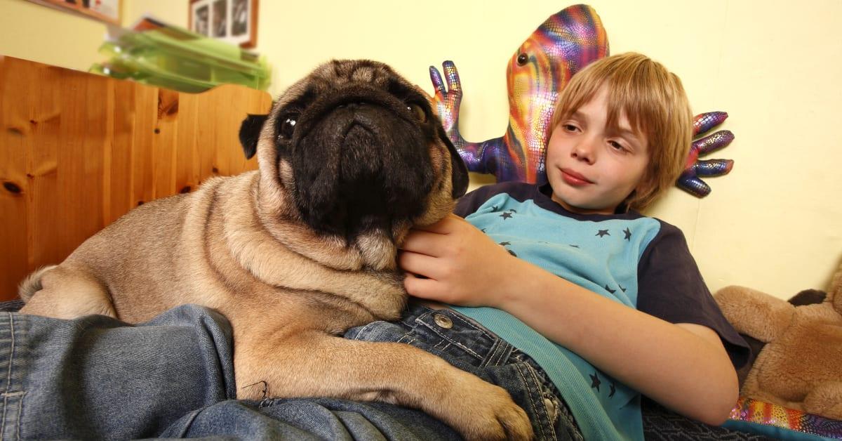 Nackte Frauen mit Hund stockbild Bild von obacht, haar