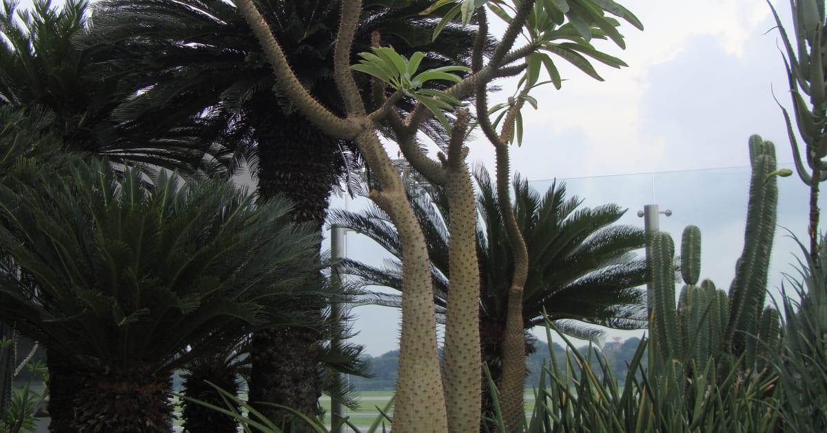 Cactus Garden Singapore Changi Airport
