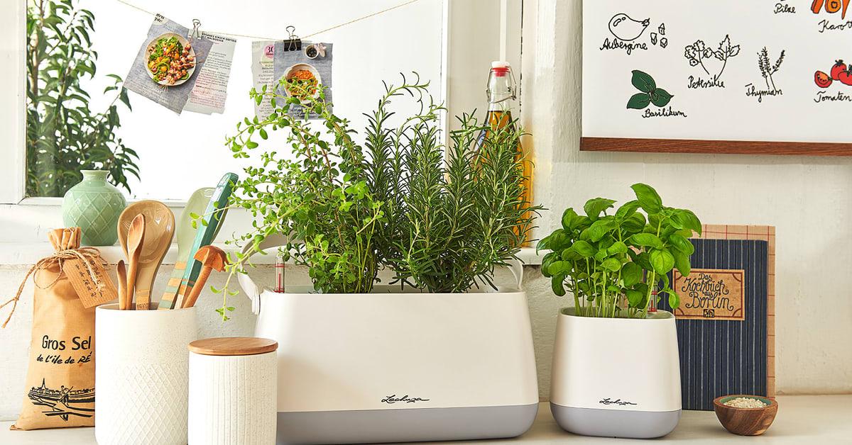 frische kr uter f r den sommer lechuza. Black Bedroom Furniture Sets. Home Design Ideas