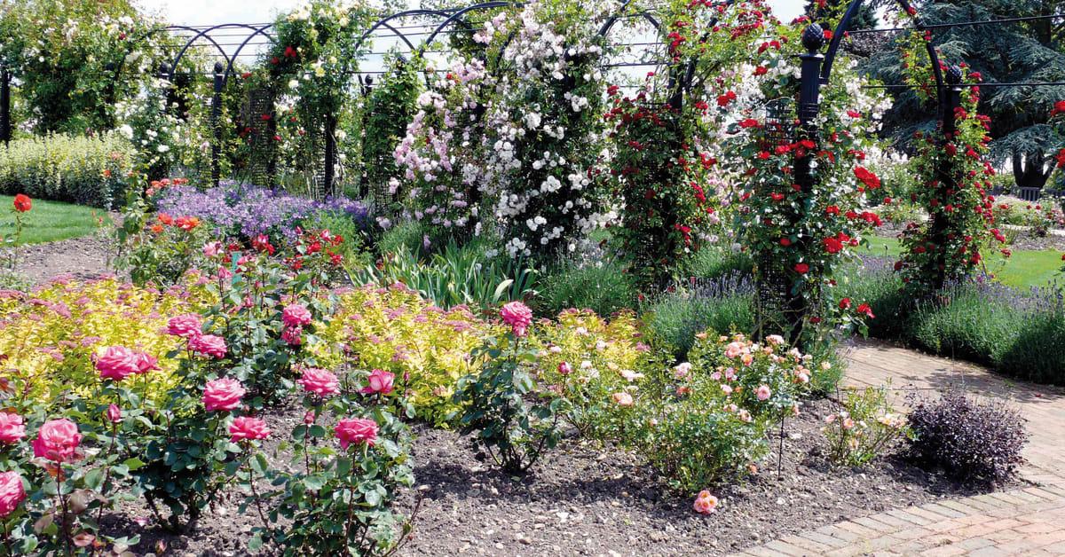 Vansta trädgård ab engelsk trädgård   bilder