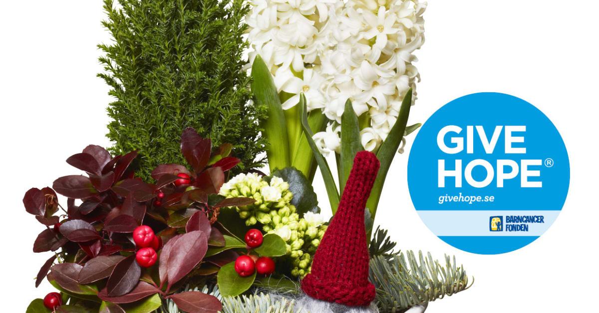 Open Till 6 00 Today S Flavors: Give Hope-julgruppen På Interflora.se