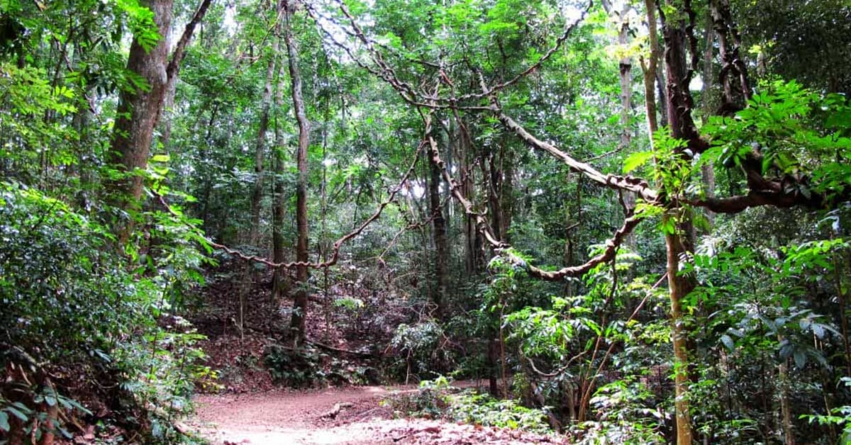 Cancelled: Naked Jungle Run in October - Naturist