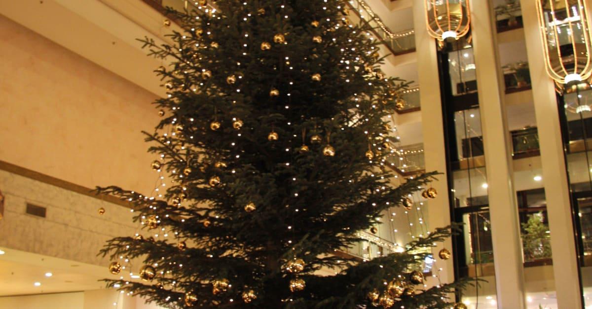 weihnachten im maritim hotel magdeburg maritim hotels. Black Bedroom Furniture Sets. Home Design Ideas