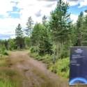 Drone-lennokit metsäteollisuuden apuna