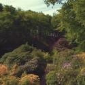 Rhododendronblomningen på Sofiero