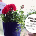 Fairtrade-märkt pelargon