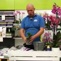Plantera om orkidé - Hur gör jag?