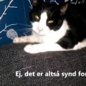 Hvorfor skal du støtte Kattens Værns arbejde?