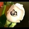 Speaking Roses på E! Entertainment