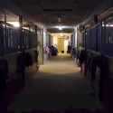 Vad händer i stallet på natten?