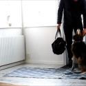 Du kommer aldrig tro på vad hunden gör!