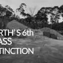 Amazonas regnskog: Hur slutar berättelsen?