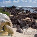 Thabela Travel — Rundresor med svensk guide