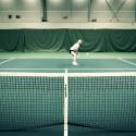 Kommunicera som ett proffs/Tennisspelaren - BKE
