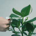Sjungande växter