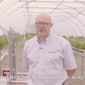 Intervju med jordbærbonde Simen Myhrene om bruk av landbruksroboter
