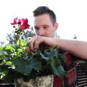 Plantera pelargoner