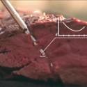 Cook Perfect stegetermometer finder selv kødets kernetemperatur