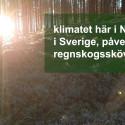 Ge regnskog i julklapp och få ett gåvobevis från Rädda Regnskog att ge bort i julstrumpan!
