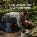 Instruktionsvideo: Så här planterar du hortensia