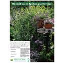 Recept på en lyckad plantering i juni-juli