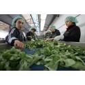Internationella experter begränsar melaminhalter i livsmedel