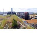 Så kan städerna återskapa gröna ytor med hög biologisk mångfald