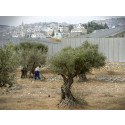EU-diplomater protesterar mot separationsmur genom Cremisan