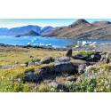 Högre växter tar över ett varmare Arktis