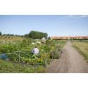 Nya villkor för odlingslotter i Malmö från 2019