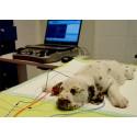 BAER-kuulotutkimukset nyt myös eteläisen Suomen Evidensia-eläinlääkäriasemilla