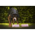 Musti & Mirri ja Happy Pet Project taistelevat hot dogeja vastaan