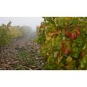 Ny webbplats till The Wine Room