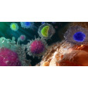 Upadacitinib når alla primära och rankade sekundära effektmått samt uppvisar signifikant bättre effekt jämfört med adalimumab i en fas 3-studie på reumatoid artrit