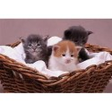 Pet cat Insurance Market: Competitive Dynamics & Global Outlook 2025 - QY Research