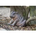 Dvärgflodhäst född i Parken Zoo –lilla Olivia kan ses på lördag om vädret tillåter
